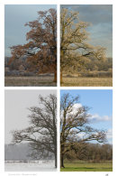 Seasonal Oak - November to April