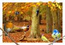 Woodland Birds