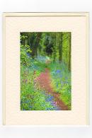 Woodland Path...