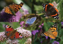 Butterfly Medley