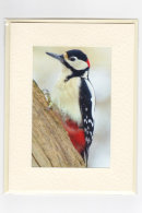 Colourful Woodpecker