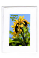Mothers Day... Sunflower