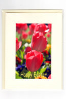 Easter... Tulip