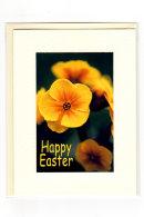Easter... Polyanthus