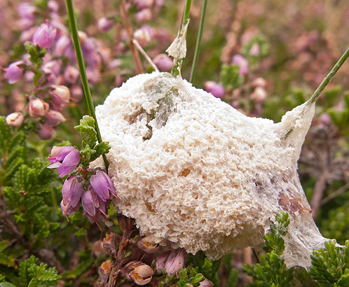 Slime Mould Fungi