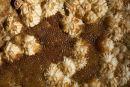 """Bryozoa - """"Cryptosula Pallasiana"""" ?"""
