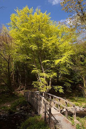 Pont Panycoed