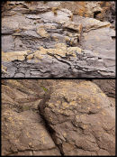 Turbidite Rocks - 2 / Flute Casts