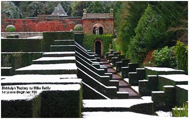 Biddulp Topiary