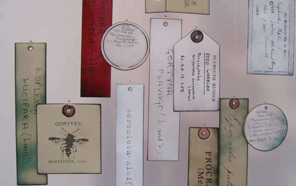 Plymouth City Museum & Art Gallery: Labels