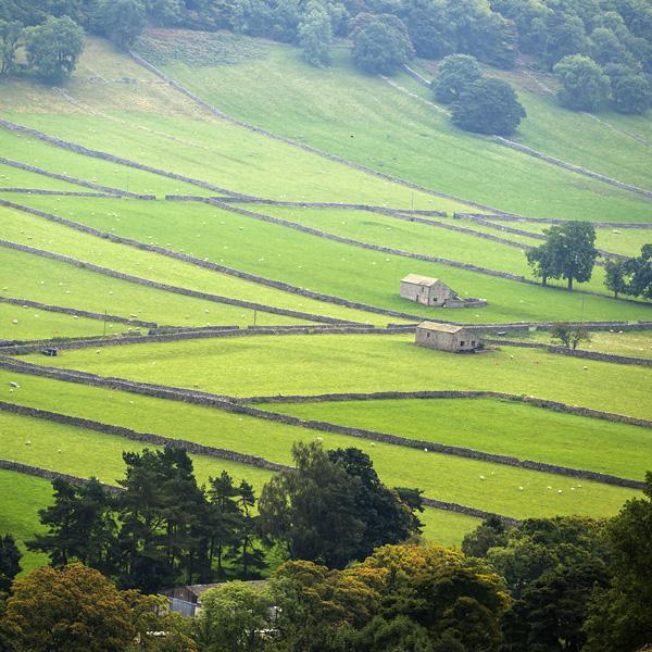 Limestone walled fields near Kettlewell