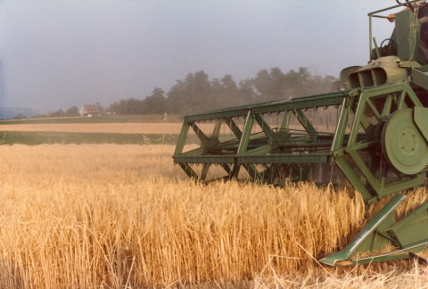 Harvesting barley on the home farm in the mid 80s
