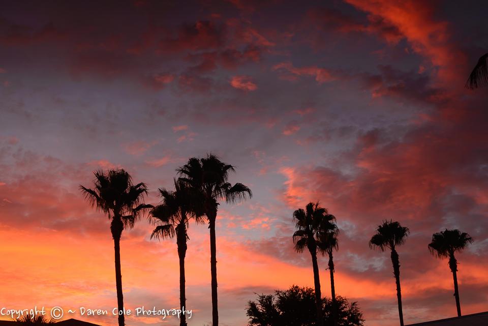 America - Palm Sunset