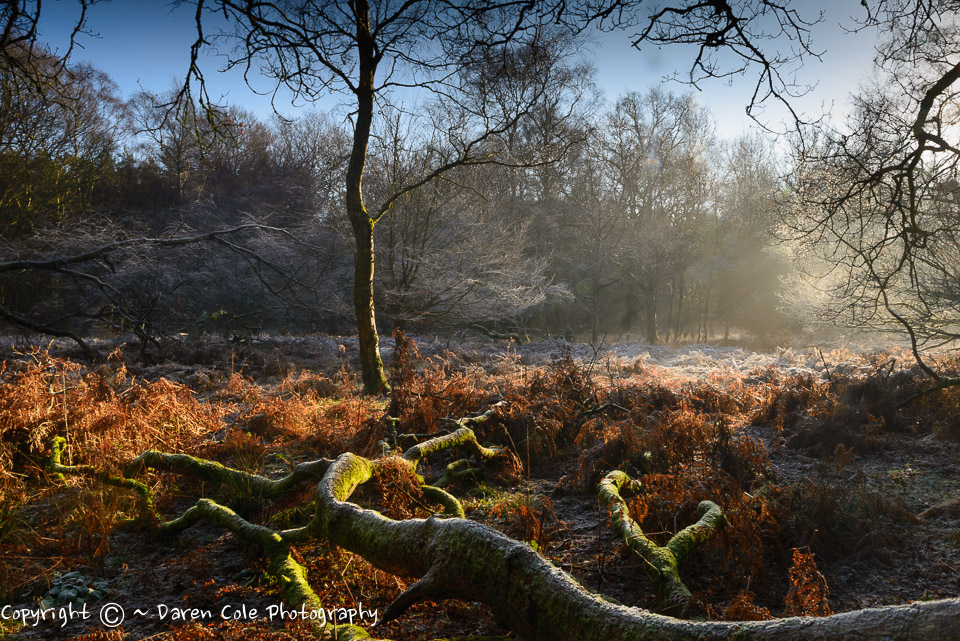 Forest Frost