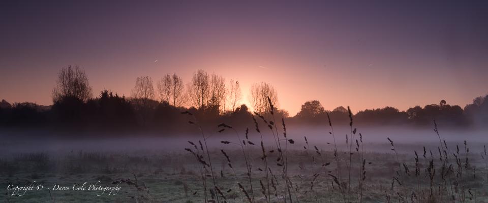 Misty Sunrise Grass Silhouettes