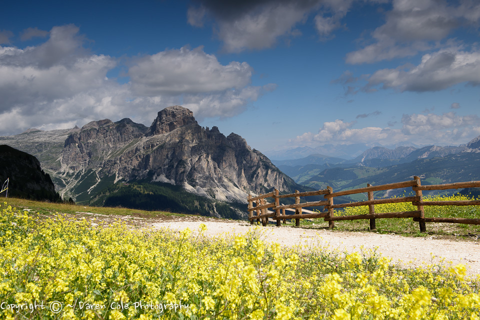 Dolomites - Yellow Flowers