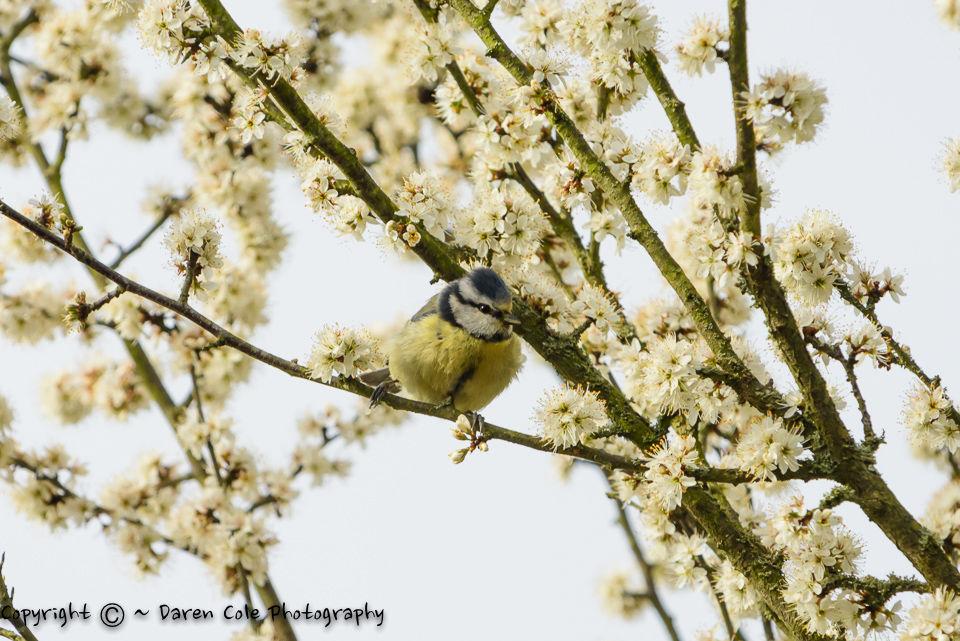 Bird in Blossom
