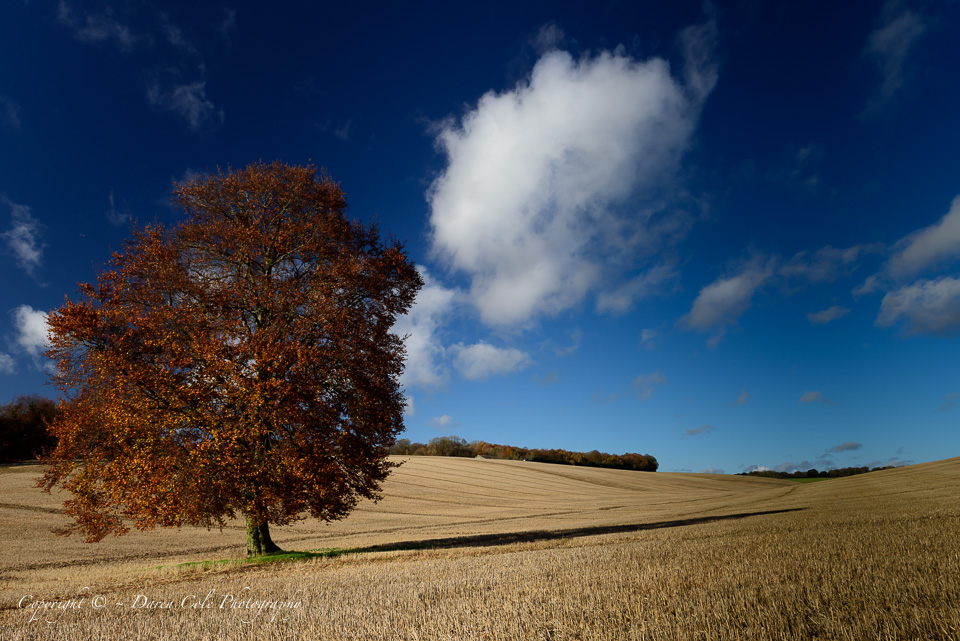 Autumn Colours and Blue Sky
