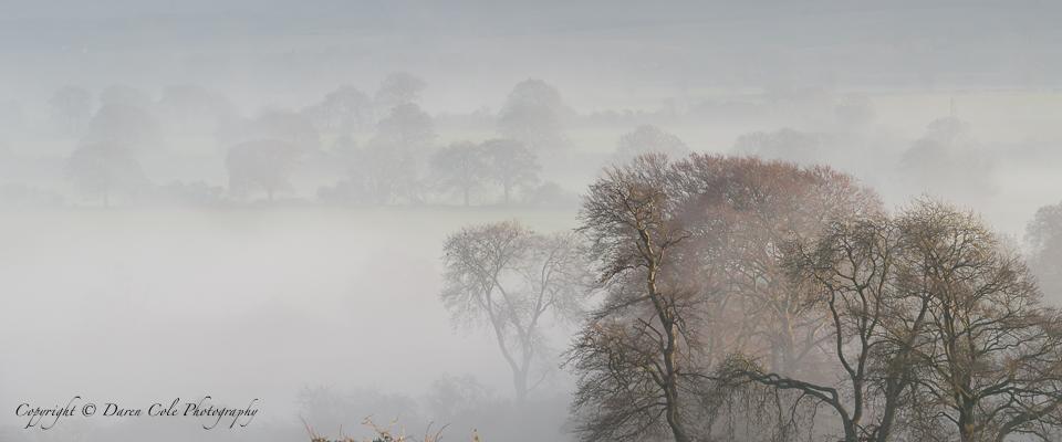 Trees Mist