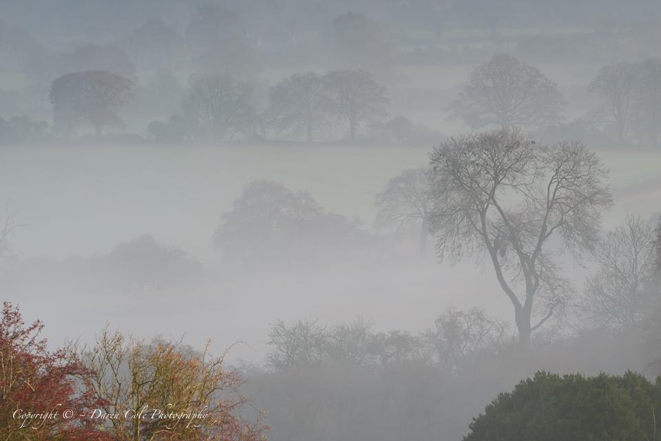 Trees Mist - Autumn Colour