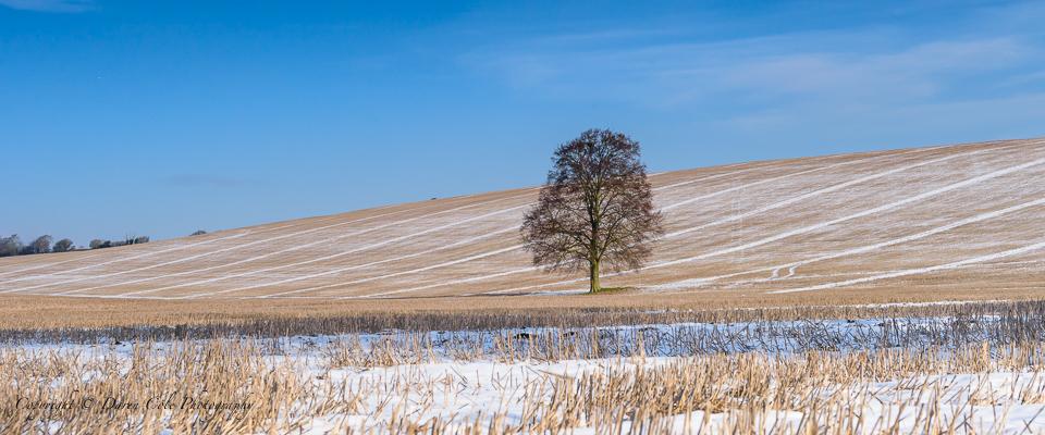 Tree Light Snow