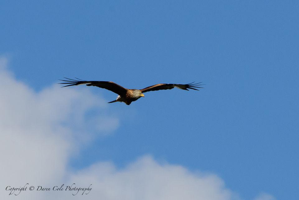 Kite Blue Sky