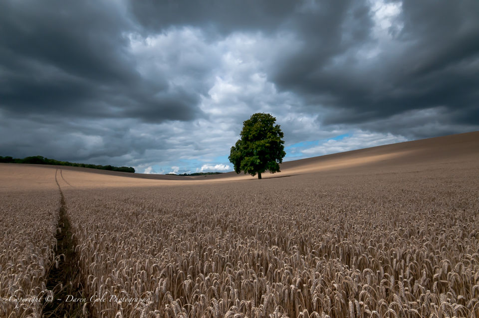 Tree and Corn