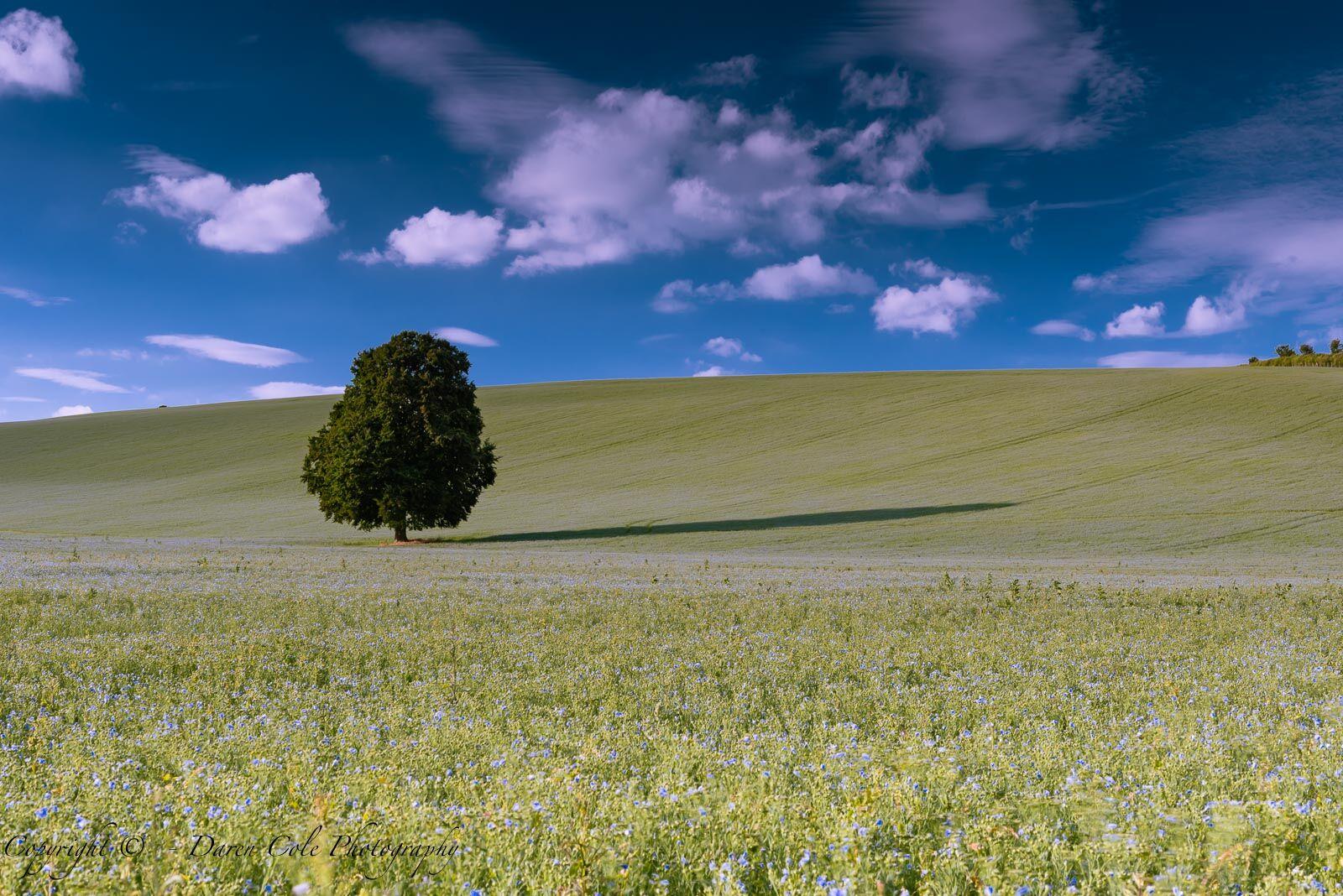 Tree Shadow Blue Sky Clouds
