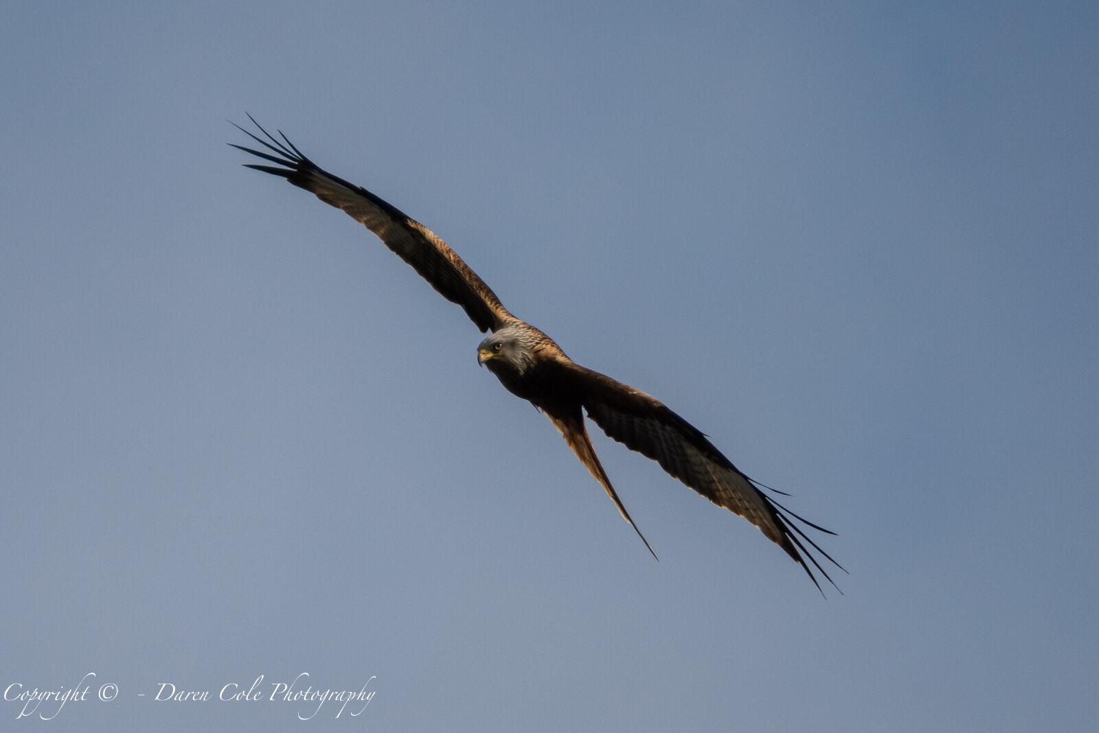 Lockdown Kite