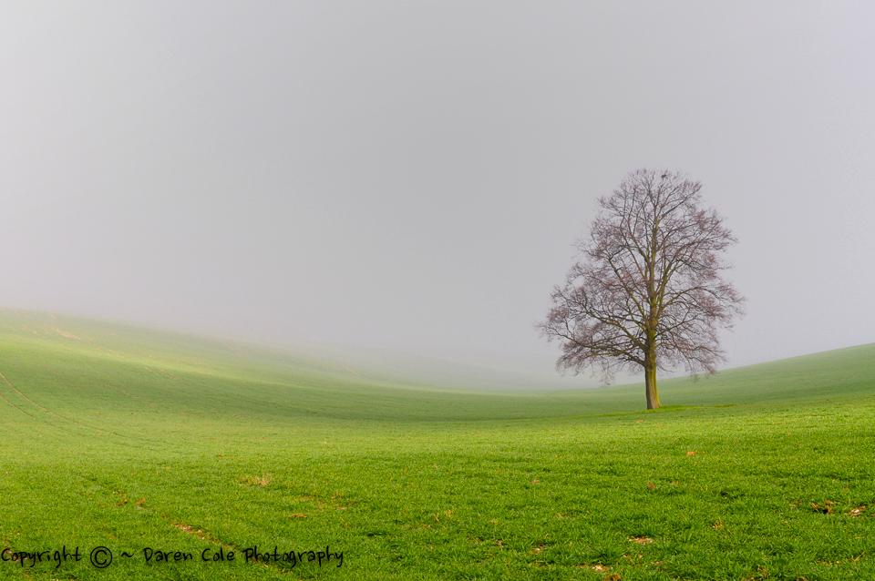 Tree in Misty Valley