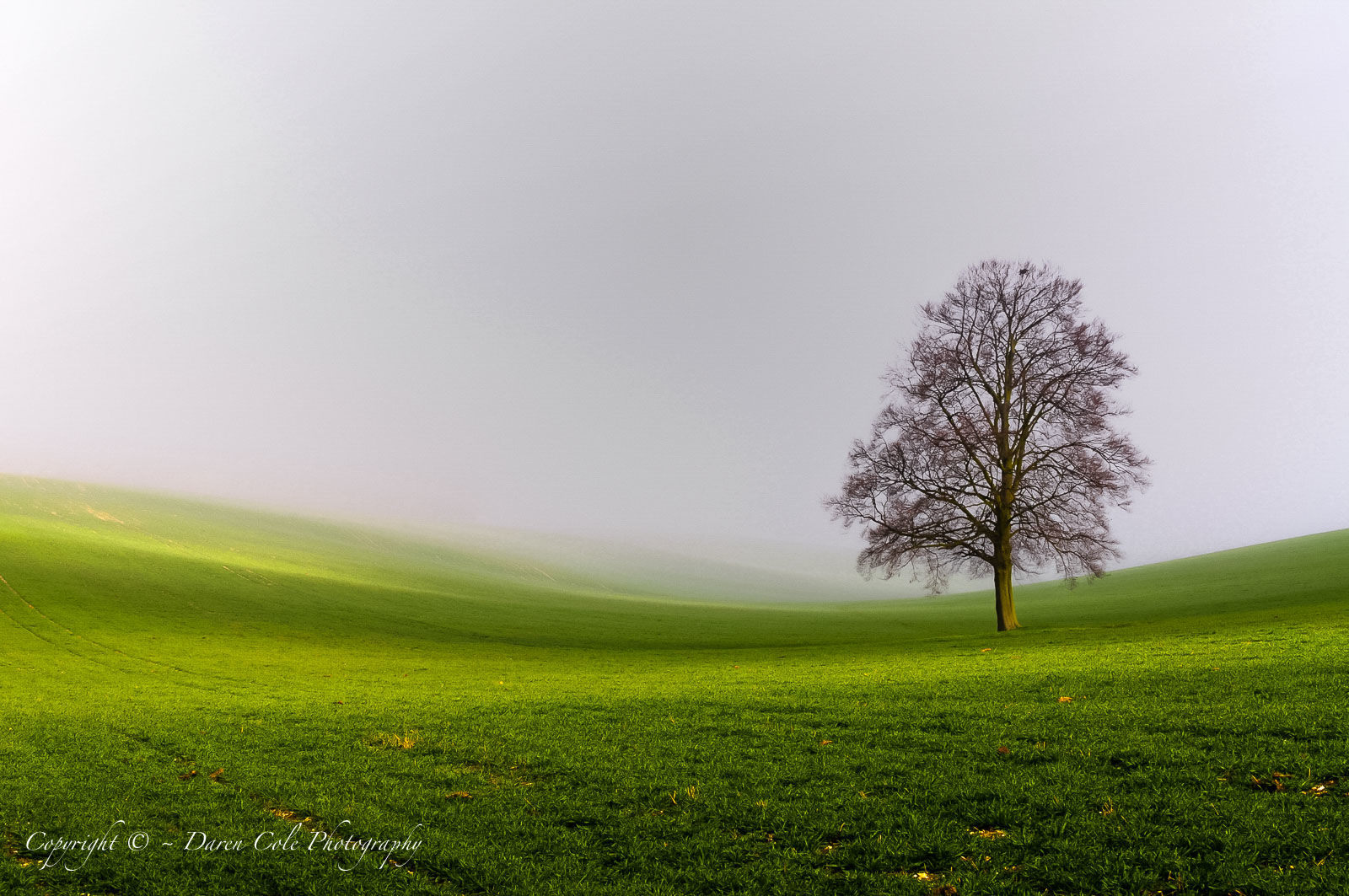 Tree in Mist Mk3-2