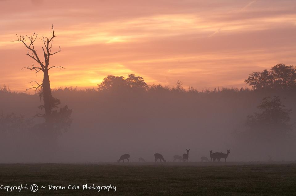 Sunrise , Mist , Deer