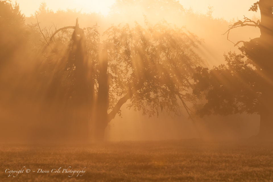 Sunrise Mist Tree