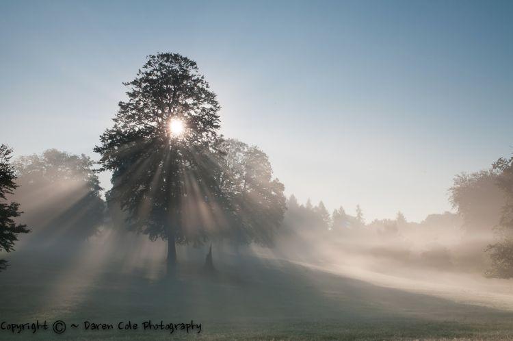 Tree Sunrise Mist
