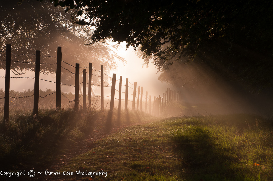 Fence Posts Silhouetted on a Misty Autumn morning