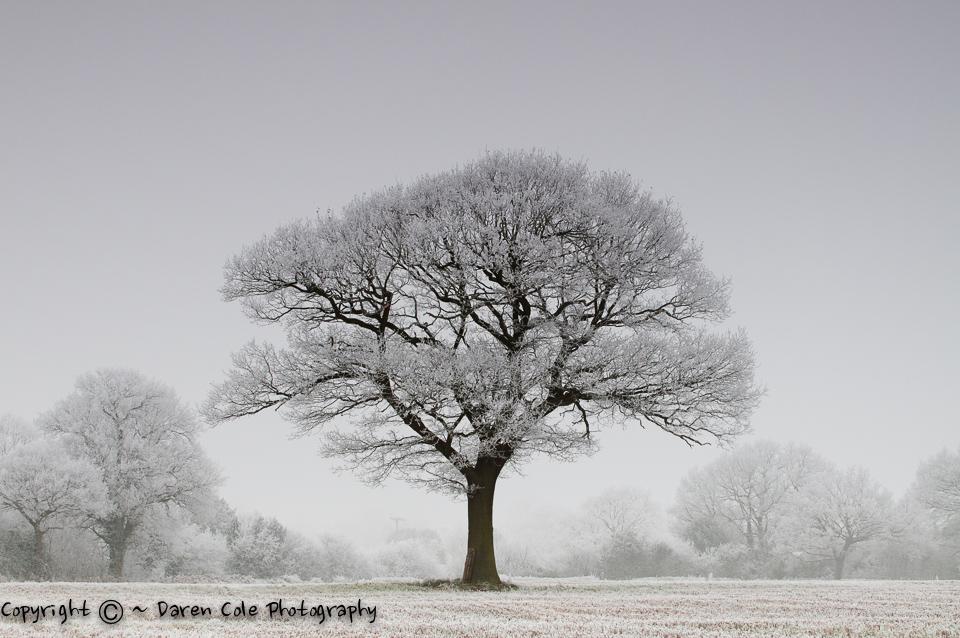 Lone Tree Hoare Frost