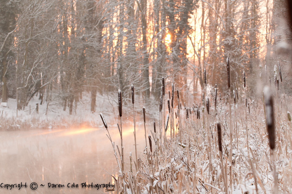 Snow and Bullrushes at Sunrise at the River