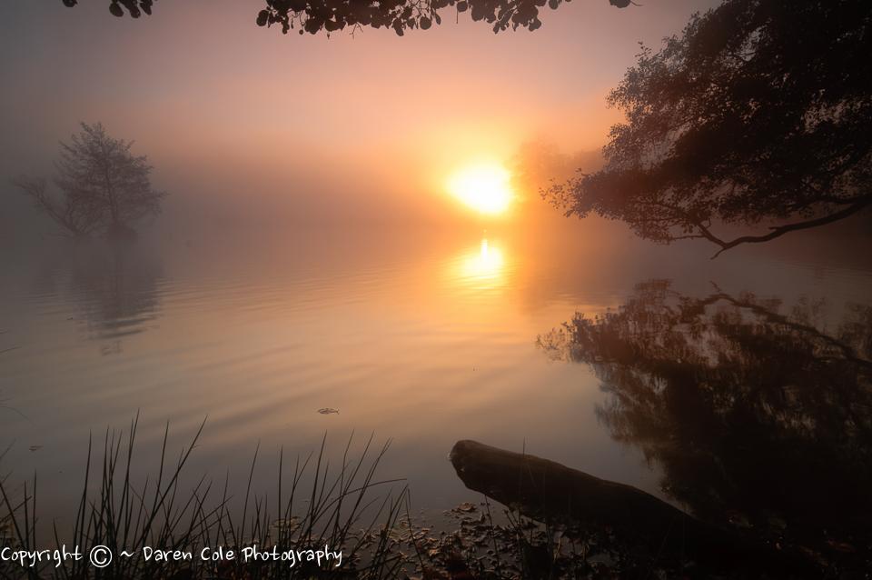 Pond at Sunrise