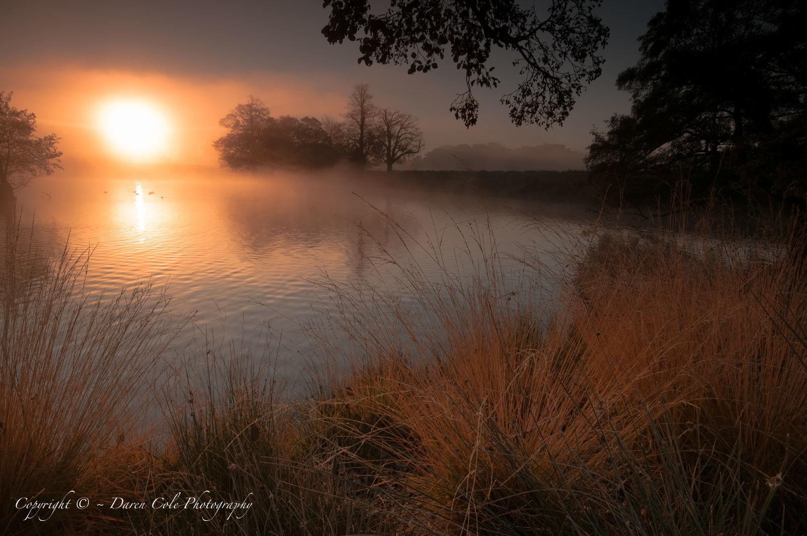 Early Morning Pond Mist Sunrise