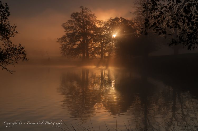Sunrise , Trees and shadowy reflections on Pond