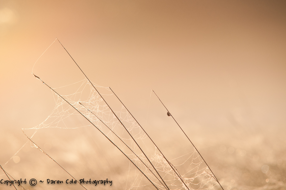 Grass Silhouettes Backlit Bug