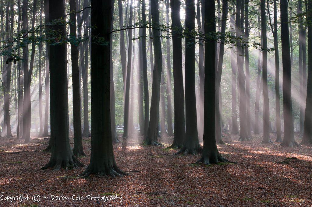 Sunbeams Through the Trees III
