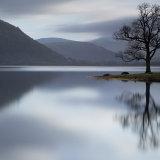 Lone Tree Bassenthwaite