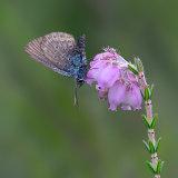 Female Silver Studded Blue