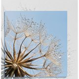 Goats Beard Seed Head