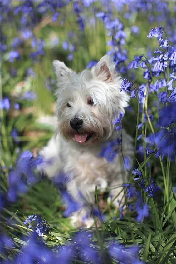 Meg in Bluebells