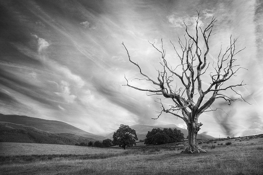 The Naked Tree, Castlerigg