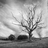 The Naked Tree, Castlerigg
