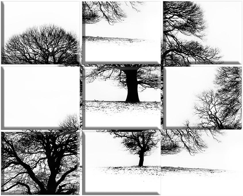 Tree Puzzle No1