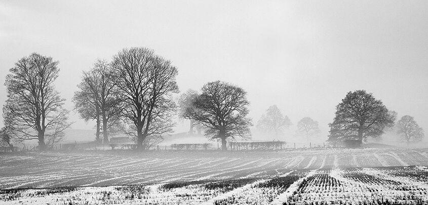 Winters Morning